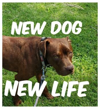 new life new dog